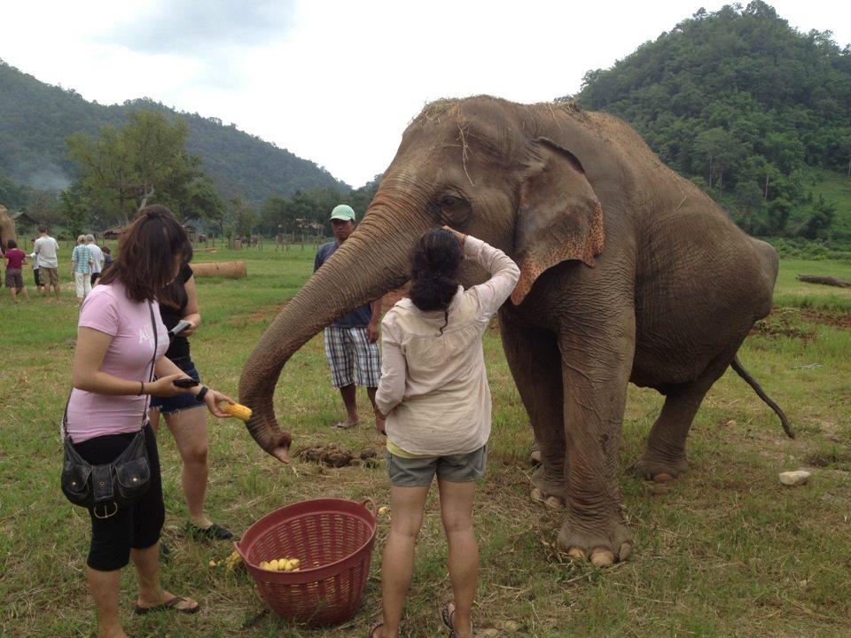 Chiang Mai Safari – Fuld dag