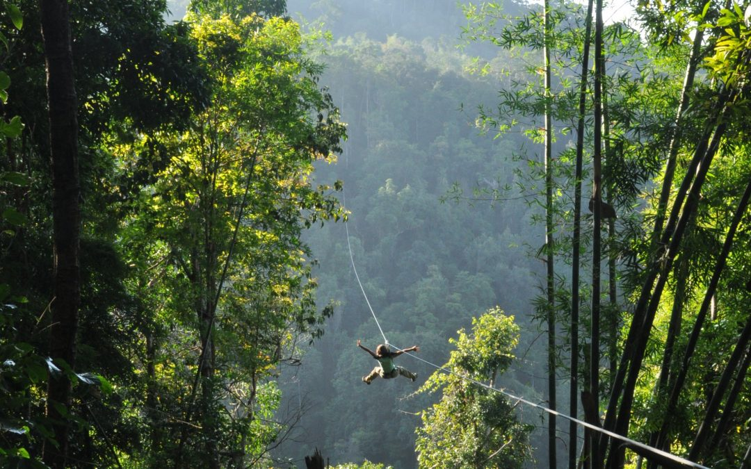 Flight of The Gibbon Chiang Mai- Fuld dag