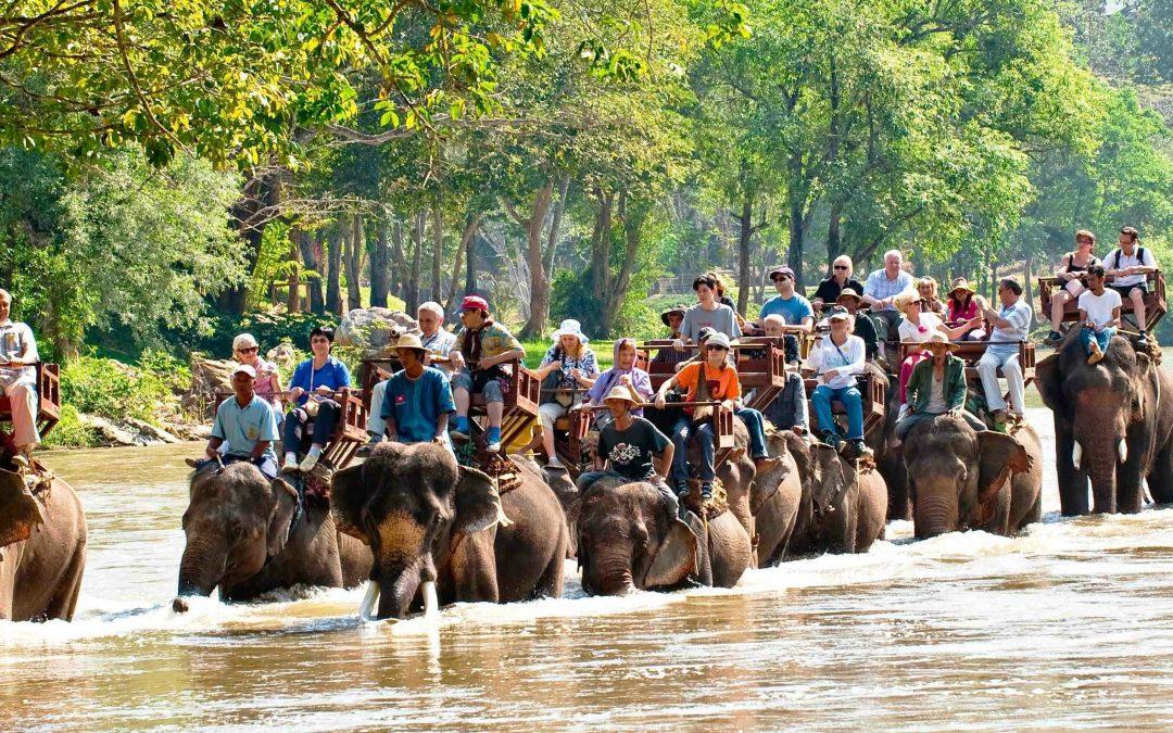 Mae Sa Elefant lejr fejrer igen thailandske elefanters nationaldag