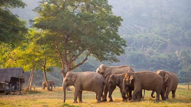Elefant Nature Park